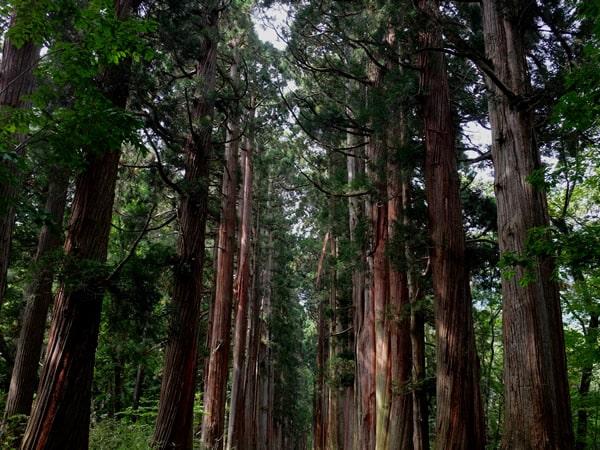 戸隠神社奥社への参道